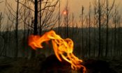 chile-forest-fire_2