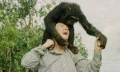 Podcast: Jane Goodall, muchas razones para la esperanza